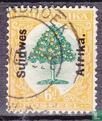 Sinasappelboom
