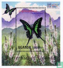 Inheemse vlinders kopen