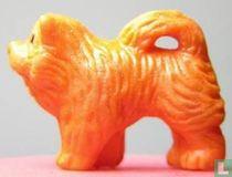 Chow - oranje