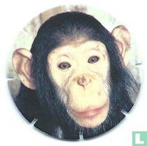 Bleekgezichtchimpansee