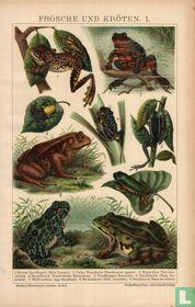 kikkers en padden frösche und kröten