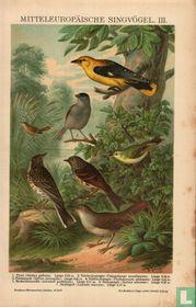 Zangvogels singvögel