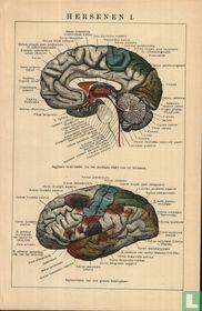 hersenen 02 - brain 02