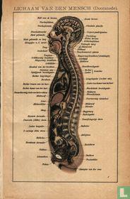 lichaam mens