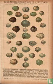 Eieren eier zangvogels singvögel
