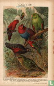 Papegaaien papegeien
