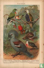 Tauben duiven