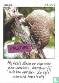 India - Schubdier