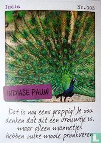 India - Indiase pauw