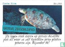 Costa Rica - Groene zeeschildpad