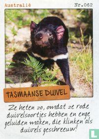 Australië - Tasmaanse duivel