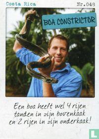 Costa Rica - Boa Constrictor