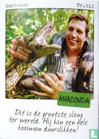 Suriname - Anaconda