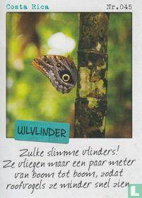 Costa Rica - Uilvlinder