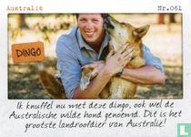 Australië - Dingo