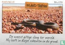 Australië - Inland Taipan