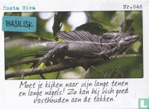 Costa Rica - Basilisk