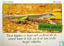 Suriname - Gewone ameiva