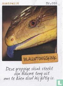 Australië - Blauwtongskink