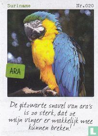 Suriname - Ara