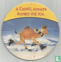 A camel always breaks the ice