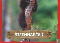 Steenmarter (onderkant)