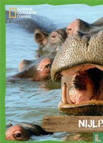 Nijlpaard (linkerkant)