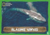 Blauwe Vinvis