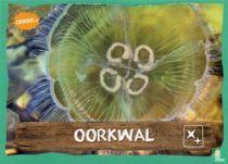 Oorkwal