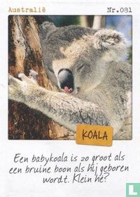 Australië - Koala