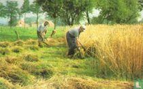 Te kleine landbouwbedrijven laten geen...
