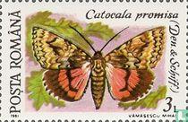 Catocala