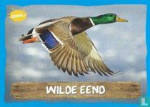 Wilde Eend