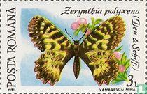 Zuidelijke pijpbloemvlinder