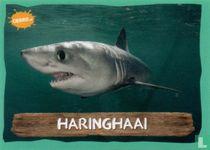 Haringhaai