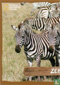 Zebra [linkerkant]