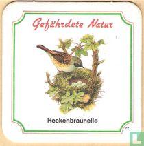 Heckenbraunelle n°22
