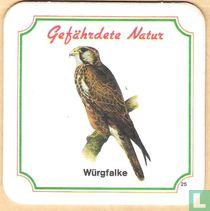 Würgfalke n°25