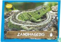 Zandhagedis (misdruk)