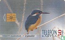 Protected Hungarian Birds - Jégmadár