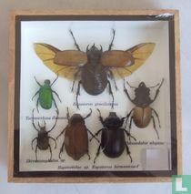 Een bonte verzameling insecten in een houten box