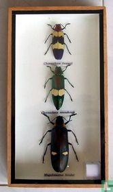 Drie gevleugelde insecten in een houten box.
