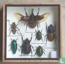 Een bonte verzameling insecten in een houten box.