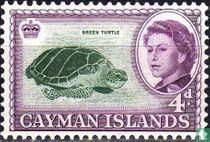 Soepschildpad
