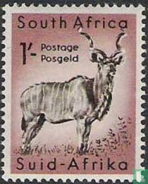 Zuid-Afrikaanse dierenwereld kopen