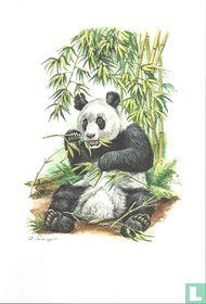 Zoogdieren - Reuzenpanda