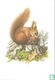 Zoogdieren - Gewone eekhoorn