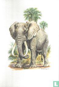 Zoogdieren - Afrikaanse olifant