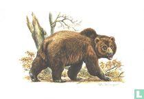 Zoogdieren - Bruine Beer