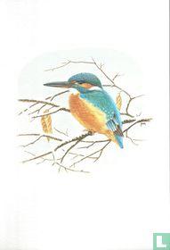 Vogels - IJsvogel